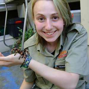 Tarantula, with Grand-daughter No.2 at Snake Centre in S.Africa